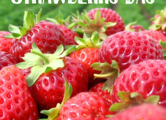 16th Annual Strawberry Day