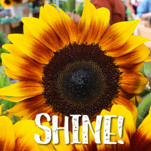 Sunflower Day – September 7th