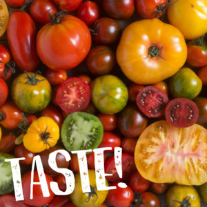 Tomato Day – August 17th